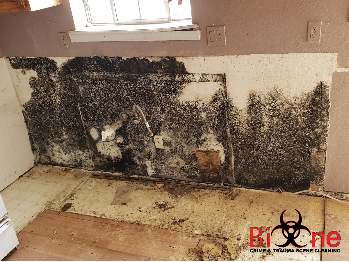 Mold - A Growing Concern